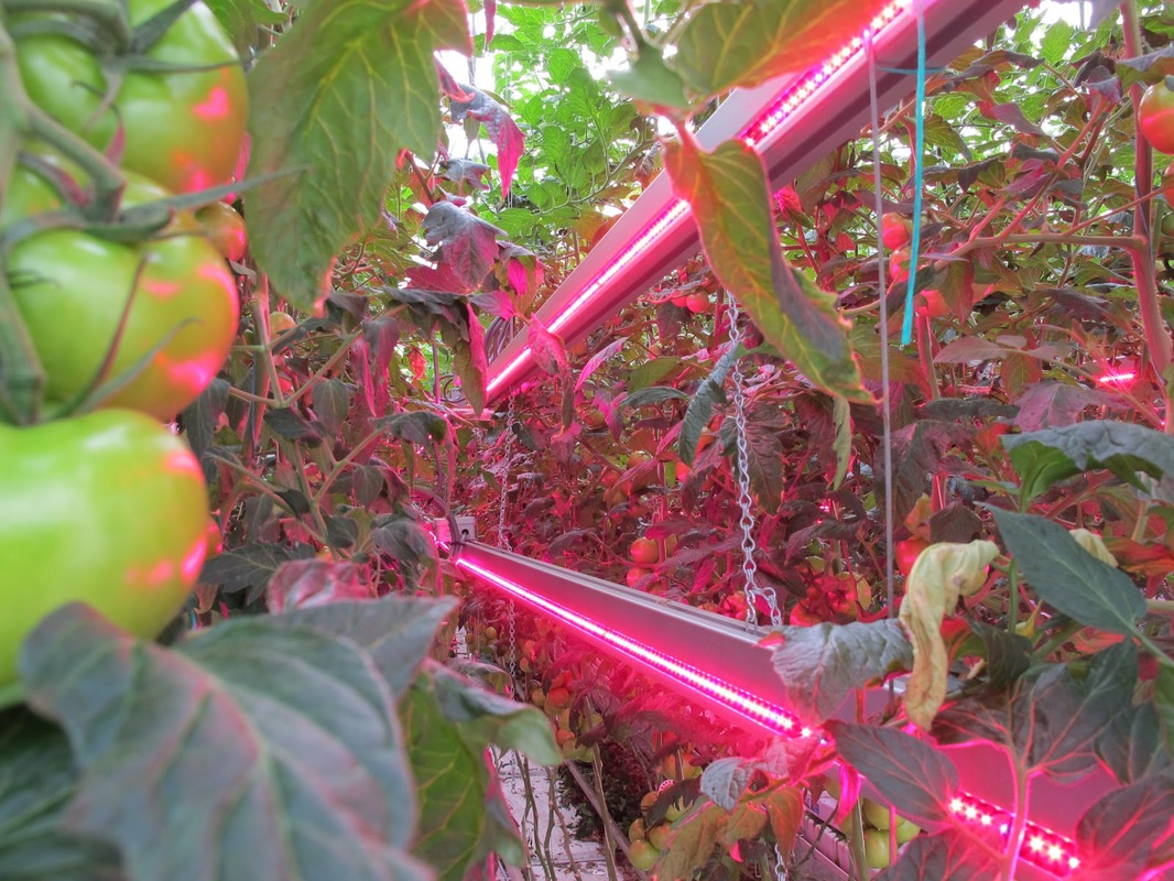 5 advantages of growing plants with led grow lights Plant grow lights