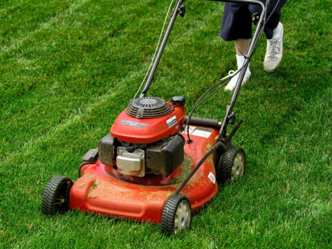 Simple Guide for Choosing the Best Lawn Mower Picture
