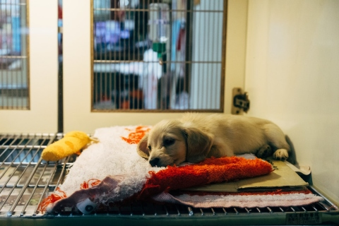 3-things-to-consider-when-starting-a-veterinary-business
