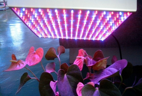 5 Advantages of Growing Plants with Led Grow Lights Picture