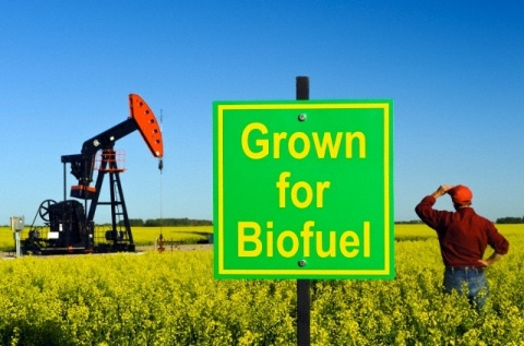 Will Biofuels Allow a Lifestyle Change of the Masses